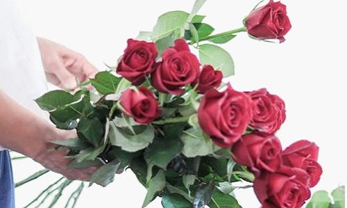 大切なイイ薔薇選びぶ